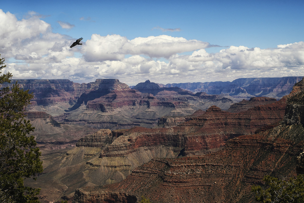 weather may grand canyon